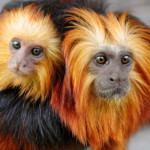 Красивые фото животных 45 – Шкаff
