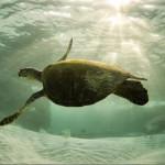 Красивые фото животных 44 – Шкаff