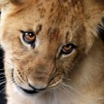 Красивые фото животных 46 – Шкаff