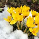 Остроумные и красивые афоризмы про весну!