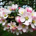 Самые красивые афоризмы и цитаты о весне!