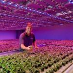 Фитосветильники для растений как дополнительное и основное освещение